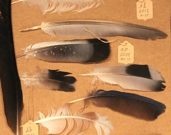 Feather collection collage wall decor