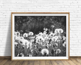 "nature photography, large art, large wall art, instant download printable art, black and white, modern, contemporary, art - ""Illumination"""