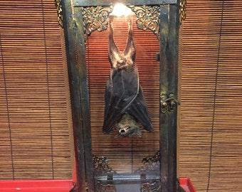 Taxidermy bat lantern