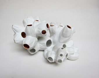 Porcelain Barnacle