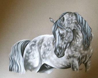 Dapple Grey Horse/Charcoal Drawing