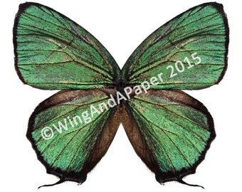 Green Imperial Arcas Printable Butterfly Costume Wings for Kids