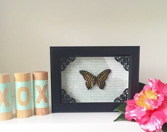 REAL butterfly, Green-spotted triangle, black, shadow box, ornate, taxidermy