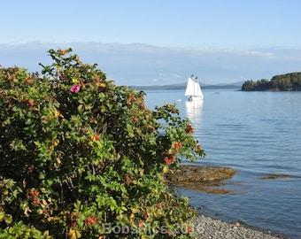Maine Series-Morning Sail- Bar Harbor