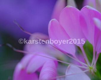 soft purple pink flower nature