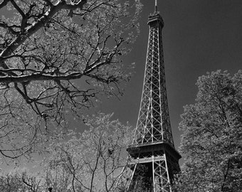 Eiffel Tower Amongst the Trees - Paris, France - Black and White Photo