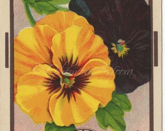 1908 Burt Seed Pansy Seed Packet