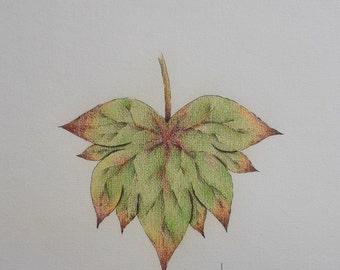 A leaf - Original