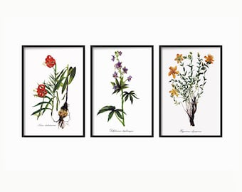 Botanical Print -  Botanical Illustration - Botanical Art - Wall Decor Art Vintage - Botanical Wall Print Decor - Print set of 3 - Wall Art