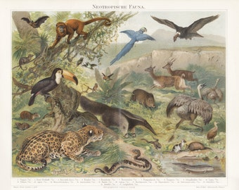 Vintage color printing Fauna, lithographic print, art print animals, antiquarian wall chart, Illustration, antique lithography