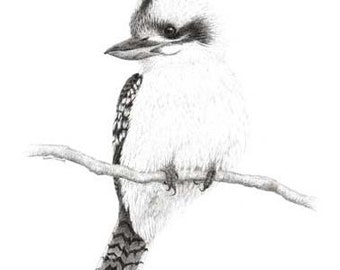 Artwork Kookaburra 3. Limited Edition (25) fine art print from my original pen and ink drawing.