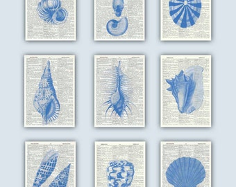 Seashell Art, Sea Shell Print, Seashells decor, Nautical Art, Blue Seashell, Beach Cottage decor, Bathroom decor,  SEASHELL dictionary page