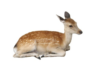 Moments In Time Deer Sitting Down - Animal Overlay