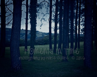 Moments In Time - Welsh Forest Night Scene Digital Background