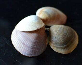 Charm shell 5