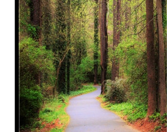 Wooden Trail on Canvas