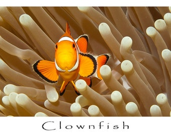 Greeting Card, Underwater Image, Clownfish in Anemone