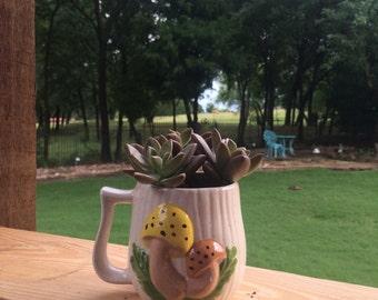 Three succulents in a fun pot