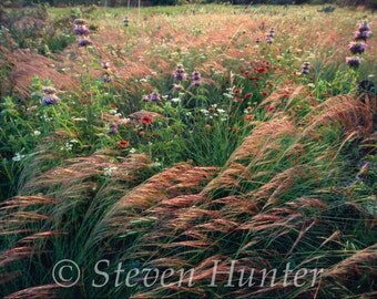 Grass and Wildflowers at Last Light, Oklahoma, Free Shipping