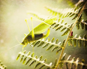 Grasshopper Print, Fine Art Photography, Nature Photography, Botanical