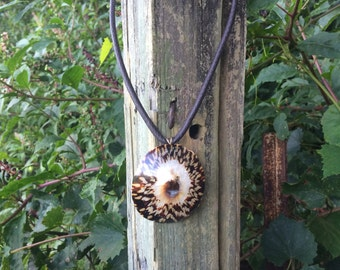 Polished Limpet Shell Necklace