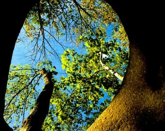 A Window into Nature