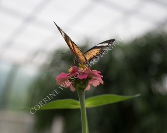 Butterfly on a Pink Flower