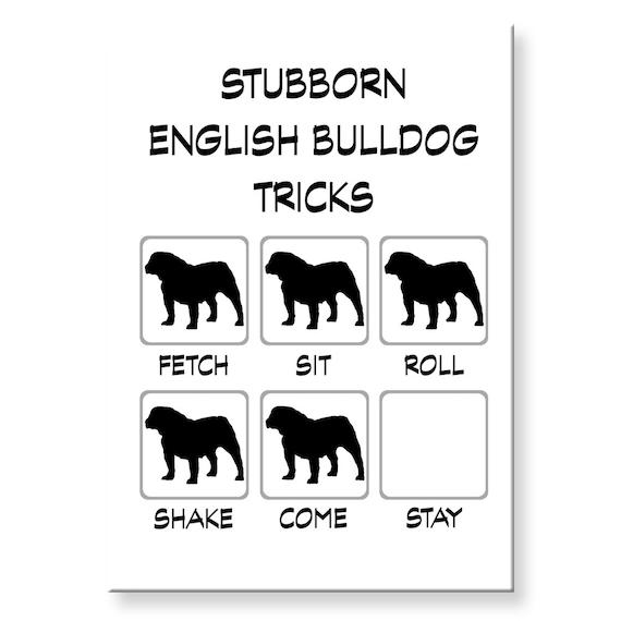 English Bulldog Stubborn Tricks Funny Fridge Magnet