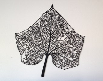 Large Leaf Skeleton