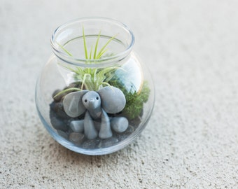 DIY Elephant Air Plant/Tillandsia Terrarium