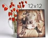 "Pet Portrait Gift, Custom Photo Portrait, 12""x12"""