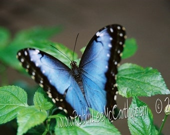 686 24a Butterfly Blues Greeting Card with Matching Envelope Blank All Occasion Note Card-Cards for when you care enough to send handmade!