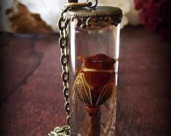 Cicada Specimen Necklace
