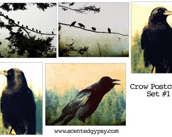 Crows & Ravens Postcard Set - 5 Different Images - Free US Shipping