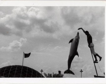 vintage photo 1950s Man Feeding Dolphin Fish Leaps in Air for Food Sea World