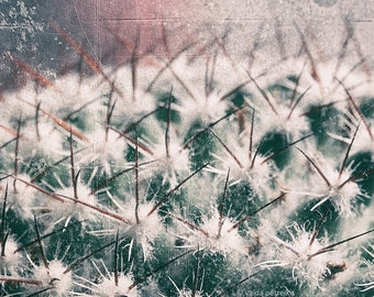 Pastel wall art Mysterious 5x7 inches fine art photo print Macro image of a cactus plant Dusty pink vintage style rustic home decor