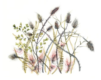 Thistles - print of original watercolor