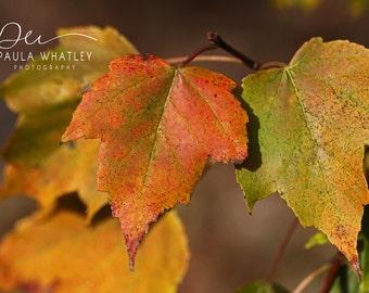 autumn art, leaf photo, rustic photo, rustic art, rustic decor, Fall Leaves photo, Autumn Photo, fall art