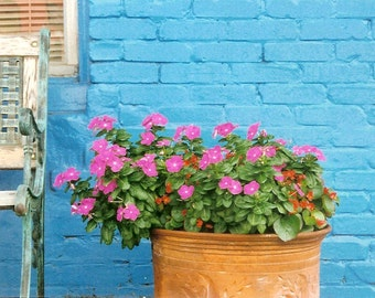 Bright Blue Brick Wall - Hot Pink Flowers and a Bench - Original Colour Film Matted Photograph by Suzanne MacCrone Rogers