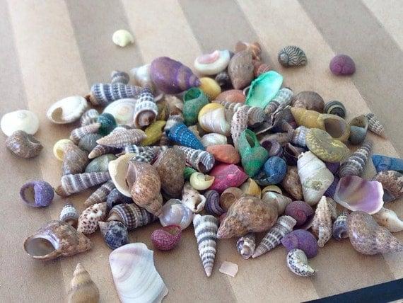 4 bottles of tiny beach seashells mix shells seashore for Tiny shells for crafts