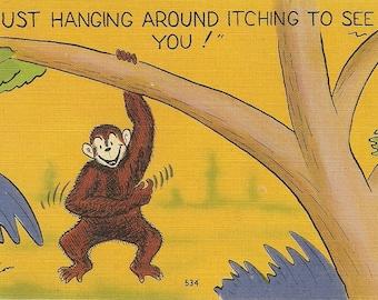 vintage Monkey postcard, funny monkey itching to see you vintage postcard vintage postcard, SharonFosterVintage