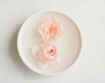 Still Life Photography - Feminine Delicate Clean English Roses Photo Pale Peach Pink Decor Simple Chic Vintage Style Wall Home Decor Print