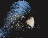 Print Size: A1 (23.4 x 33.1 in) Australian photo, bird photo, original photography, Cockatoo picture, home decor, office decor, interesting