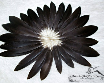 "Small Black Feathers Black Wing Feathers Real Bird Feathers Real Plumage Black Runner Duck Feathers For Crafts Organic 20 @ 2"" - 3"" / BR9"