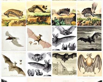 bats clip Art digital download Collage sheet 2 INCH SQUARES images graphics printables