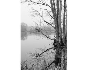 Landscape Photography / Rustic Decor / Photo of Trees / Black and White Print / Nature Photograph / Pond Reflection / New England / Fine Art