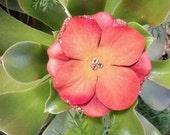 Copper Penny Sparkler Hydrangea Hair Flower