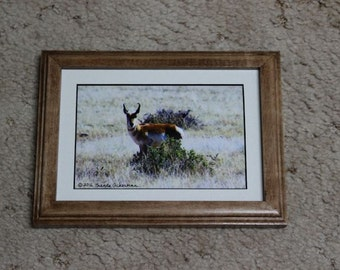 Antelope Photography