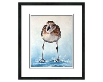 plover bird art PRINT shorebird black-bellied plover