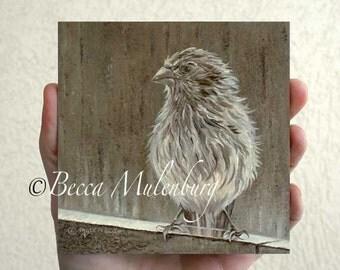 House Finch bird art Original oil painting miniature animal nature fine art